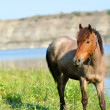 Stock Photo: Horse on green meadow