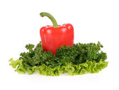 Red pepper, parsley and salad leaf isolated on white background — Stock Photo