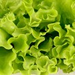 Stock Photo: Green salad
