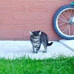Funny little kitten — Stock Photo #32975813
