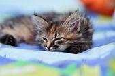 Cute little kitten — Stock Photo