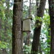 Bird house hanging on tree — Stock Photo #33005569