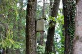 Bird house hanging on a tree — Stock Photo