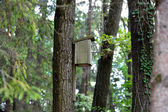 Bird house hanging on a tree — Stock Photo