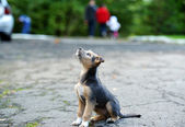 Puppy outdoors — Stock Photo