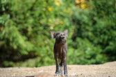 森のイノシシ — ストック写真