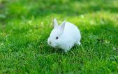 在草丛中的有趣的婴儿白色兔子 — 图库照片
