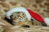 Grappige kat in Santa Claus Glb — Stockfoto