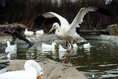 White stork — Stock Photo