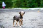 Joven cachorro — Foto de Stock