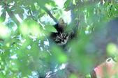 Zabawny kotek na drzewie — Zdjęcie stockowe