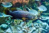 Peixes de mar — Foto Stock