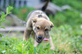 Young happy puppy — Stock Photo