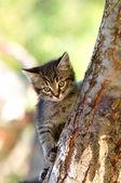 Funny kitten on a tree — Stock Photo