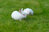Funny baby witte konijnen in gras — Stockfoto