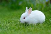 草で面白い赤ちゃん白ウサギ — ストック写真