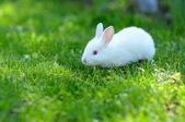 Funny baby wit konijn in gras — Stockfoto