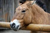 Funny Horse — Stock Photo