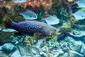 海の魚 — ストック写真