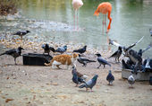 Amazing picture - cat steals food birds — Stock Photo
