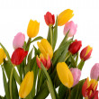 Colorful bouquet of fresh spring tulip flowers isolated on white — Stock Photo #44633861
