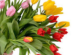 Colorful bouquet of fresh spring tulip flowers isolated on white — Stock Photo