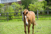 Horse in meadow. Summer day  — Stock Photo