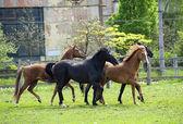 Лошади в поле — Стоковое фото