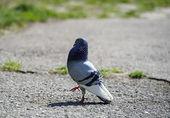 Curious pigeons — Stock Photo