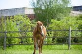 Pferd auf Weide — Stockfoto