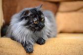 Funny kočka面白い猫 — Stock fotografie