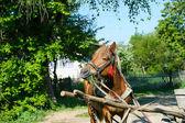 Využita kůň — Stock fotografie
