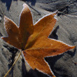 Frosted maple leaf glittering in the sun on a wet sand patch — Stock Photo