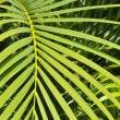 Vibrant botanical background of a green palm tree leaf with a shallow depth of field — Stock Photo