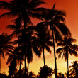 Dark palm tree silhouettes over a fiery red, orange and yellow sunset — Stock Photo