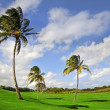 Palm trees on a hilly golf course in Kauai, Hawai — Stok fotoğraf #36684943