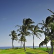 Palm trees on a hilly golf course in Kauai, Hawai — Photo #36684963