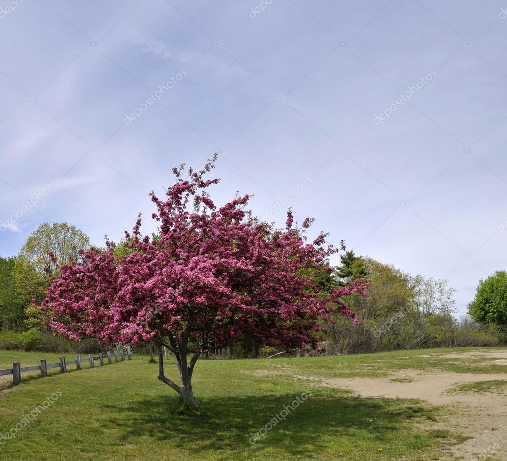 Rosa Blühender Baum Im Frühling : bl hender baum mit rosa bl ten in einem ppigen gr nen ~ Lizthompson.info Haus und Dekorationen