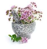 Bunch of fresh oregano (Origanum vulgare) in a marble mortar with pestle on a white background — Stock Photo