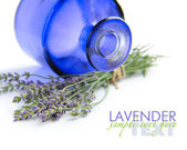 Bunch of lavender flowers (Lavandula spica) on a white backgroun — Stock Photo
