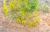Blossoming of dill on a wooden background — Stock Photo