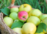 Healthy Organic Apples in the Basket — Stok fotoğraf