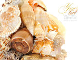 Cockleshells on a white background with space for text — Stock Photo