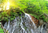 Beautiful waterfall in the middle of green forest — Stock Photo