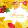 Autumn frame composed of colorful autumn leaves on a white background - Stock Photo