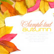 Beautiful autumn leaves and a greeting card - Stock Photo