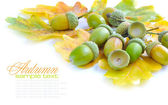 Oak acorns with leaves on a white background — Stock Photo