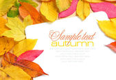 Beautiful autumn leaves and a greeting card — Stock Photo
