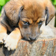 Cute a puppy of rate is on the stump of sunny canicular day — Stock Photo