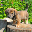 Stock Photo: Cute puppy of rate is on stump of sunny canicular day